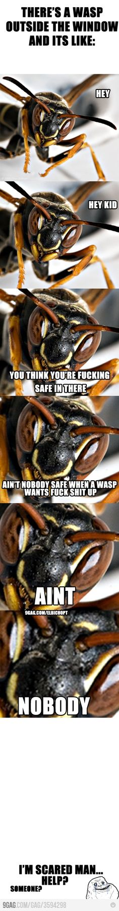 This is exactly what the wasp said to my boyfriend right before he got into his car and caused him to wreck
