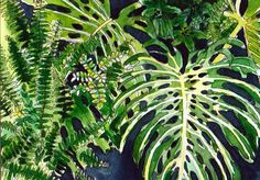 Original Watercolour Painting - Tropical Leaves, Monsteras and Ferns, available at Etsy