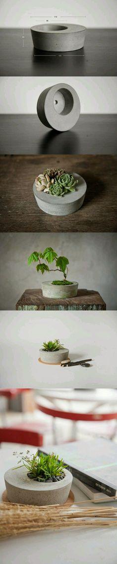 Voici la tendance des pots de ciments avec des sedums qui demande peut d'entretien