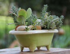 Bathtub Succulents live plants & planter by nevastarr on Etsy Succulents In Containers, Container Plants, Cacti And Succulents, Planting Succulents, Container Gardening, Live Plants, Cool Plants, Diy Plante, Cactus Terrarium