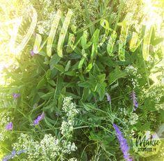 wild herba - wild mint and oregano Mint, Herbs, Herb, Peppermint, Medicinal Plants