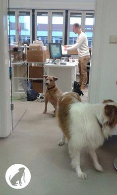 Leinentausch | Umzug Hundeumzug Bürohunde