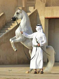 Magnificent specimen of Arabian horse Beautiful Arabian Horses, Most Beautiful Horses, All The Pretty Horses, Animals Beautiful, Horse Costumes, Arabian Beauty, Horse Drawings, Horse Photos, White Horses