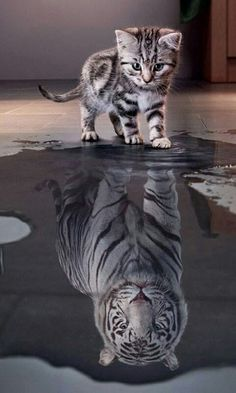 We are all tigers