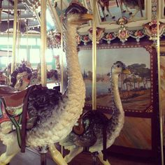 Dentzel Carousel at Glen Echo Park.