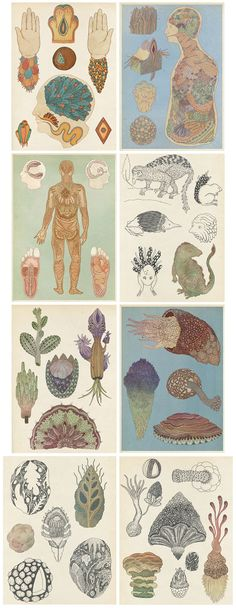 Katie Scott 's illustrations (via but does it float ) a charming blend of Ernst Haeckel and anatomical charts. Illustrations, Illustration Art, Forest Tattoos, Creation Art, Soul Art, Anatomy Art, Art Graphique, Klimt, Black And Grey Tattoos