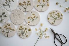 Pressed plants on clay. Plantes premsades en argila