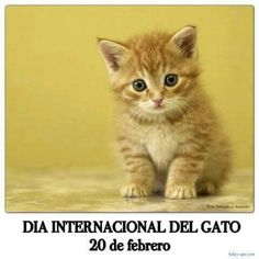 Al gato, en su día !!!