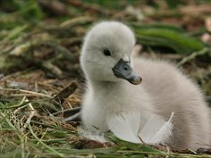 sometimes they're white | 32 Reasons Why Ducklings Are Totally Underrated