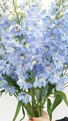 Light Blue Flowers, Turquoise Flowers, Flower Lights, Hydrangea Boutonniere, Blue Boutonniere, Floral Shops, Wholesale Flowers Online, Babys Breath Flowers, Giant Flowers