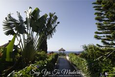 Wedding venues in Madeira: Oceanview Altar at the Porto Mare | Say Yes to Madeira Hotel Wedding, Destination Wedding, Dream Wedding, Reception Party, Reception Areas, Small Wedding Receptions, Wedding Venues, Wedding Cake Cutting, Wedding Altars
