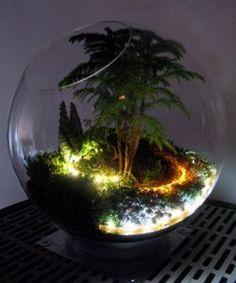 terrarium with lights