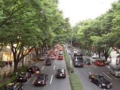 View of Omotesando Boulevard
