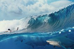 Surfing with sharks... WOW my dream in one shot #surf #photo
