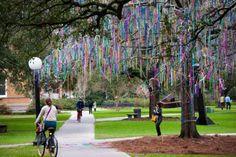 Mardi Gras Tree @ Tulane