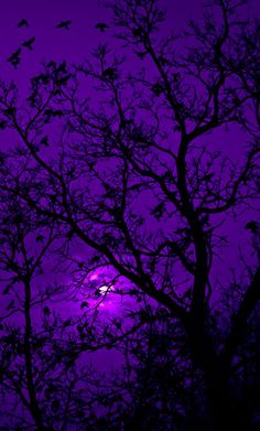 Purple Aesthetic Discover The Color Purple Divinity Lane When Doves Cry Dark Purple Aesthetic, Violet Aesthetic, Lavender Aesthetic, Rainbow Aesthetic, Aesthetic Colors, Aesthetic Collage, Aesthetic Pictures, Purple Aesthetic Background, Dark Purple Background