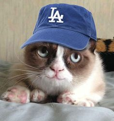 The Dodgers are trying to win the internet.  pic.twitter.com/0qWCV7QWWh