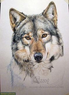 Как нарисовать волчицу. Урок рисования цветными карандашами