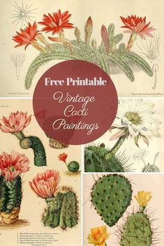 Cacti are so popular in interiors at the moment. These beautiful vintage cactus … – From Parts Unknown Vintage Prints, Vintage Art, Cactus Print, Cactus Cactus, Indoor Cactus, Cactus Flower, Cactus Painting, Picture Boxes, Vintage Ephemera