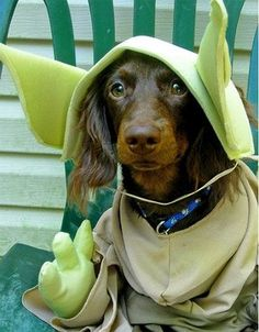 14 Dogs Who Have The Force With Them   FamilyPet
