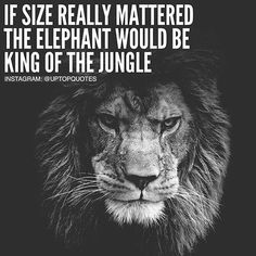 If Size Really Mattered The Elephant Would Be The King Of The Jungle life quotes quotes quote life motivational quotes instagram quotes inspirational quotes about life life quotes and sayings instagram life quotes life inspiring quotes life image quotes best life quotes quotes about life lessons