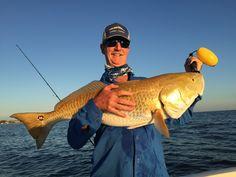 "Bulll 40"" Redfish Sanibel Island"
