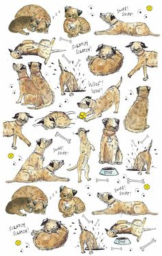 Border Terrier madness!
