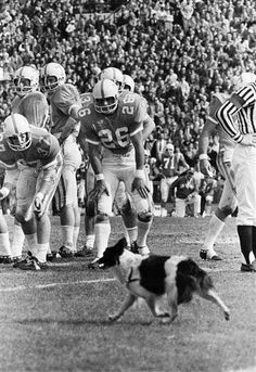 Tennessee players try to coax a dog off the field during the the 1971 Sugar Bowl  @A Lifetime Legacy