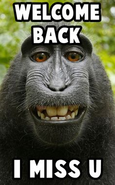 welcome back meme  #meme #welcomebackmeme #monkeymeme Welcome Back Meme, Meme Meme, Memes, Today Meme, Welcome Images, Dry January, British Things, Dry Well, I Miss U