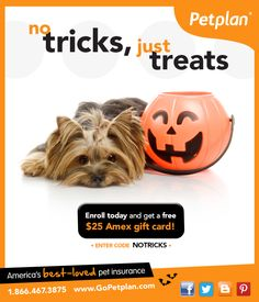 Get an early Halloween treat when you protect your pet with Petplan