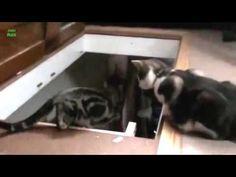 Funny cat knocking https://www.youtube.com/watch?v=Az_Q82ruBzE