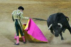 El Zotoluco, matador. Badass, Cow, Passion, Animals, Party, Animales, Animaux, Animal, Animais