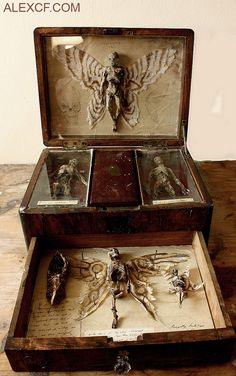 A very creepy DIY for a cabinet or antique lap desk of curiousities! Perfect for the front hallway or foyer for the Halloween party! Magic Box, Assemblage Art, Weird And Wonderful, Macabre, Wicca, Faeries, Shadow Box, Dark Art, Altered Art
