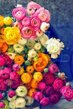 gorgeous colors of ranunculus