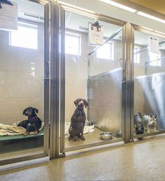 2013 Veterinary Hospital of the Year: Lap of luxury - Hospital Design