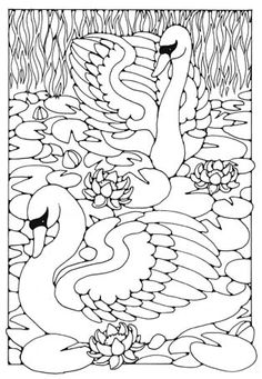 Beautiful Parrot Coloring Page Nice Bird Coloring Sheet More
