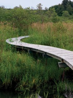 Nature and Structure Are One  When we think of paths through nature, we may first think of somewhat muddy trails carved out willy-nilly through the trees, covered in leaves. But a few landscape architects and architects have been showing how paths can be designed, set-apart, yet also enhance the experience of being surrounded by nature while carefully protecting natural habitat.