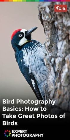 Bird Photography Basics: How to Take Great Photos of Birds » ExpertPhotography