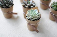 Succulent Wedding Favors super-cute