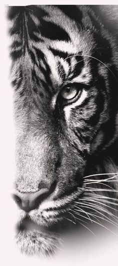 Tiger - Katzen - Tattoo Designs For Women Tiger Eyes Tattoo, Tiger Tattoo Sleeve, Tiger Tattoo Design, Tiger Design, Sleeve Tattoos, Tattoo Designs, Tattoo Ideas, Lion Design, Tigeraugen Tattoo