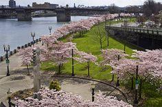 Portland's Waterfront Park