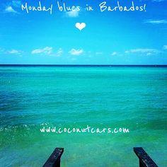 Happy Monday! #barbados #travel #coconuts #hirecar #barbadoscarrentals #barbadostours #barbados2016 #coconutcarrentals #rentalcars #deals #best #explore #islandtours
