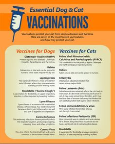 Essential Dog & Cat Vaccinations Vaccinations protect your pet from serious dise.-- Essential Dog & Cat Vaccinations Vaccinations protect your pet from serious diseases and bacteria. Here are seven of the most trusted vaccinations, and how. Veterinarian Technician, Vet Tech Student, Diy Pet, Cat Diseases, Vet Assistant, Dachshund, Cat Care Tips, Pet Care, Pets