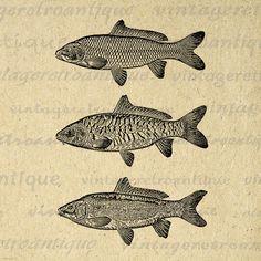 Three Carp Fish Image Digital Download by VintageRetroAntique