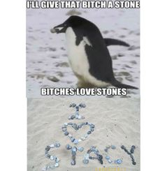 penguins got it sussed