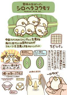 高橋のぞむ@デザフェスB-137(@T_marohiko)さん | Twitter Creature Drawings, Animal Drawings, Cute Drawings, Kawaii Illustration, Children's Book Illustration, Illustrations, Cute Moth, Animals And Pets, Cute Animals