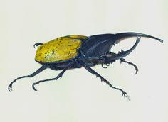 Título: Escarabajo Ártico Autor: Ana Hernández Técnica: Acrílico con acuarela