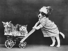 The True #Story Behind Those #Vintage Baby Animal Photos http://ibeebz.com