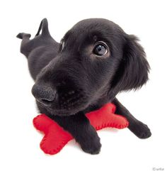 Artlist Collection THE DOG (Flat-Coated Retriever) What do you like to do with your dog? A. Hiking B. Swimming C. Frisbee D. Skydiving