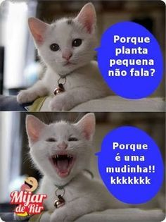 Oh my goodness hahahaha Cat Memes, Dankest Memes, Funny Memes, Jokes, Gato Do Face, 4 Panel Life, Whatsapp Messenger, Good Humor, Try Not To Laugh